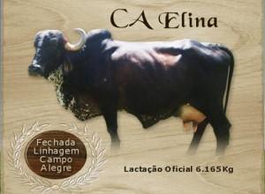 CA GALANTE B3259 x RAMONA D1888